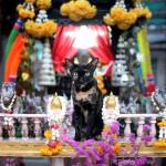 bangkok cat shrine